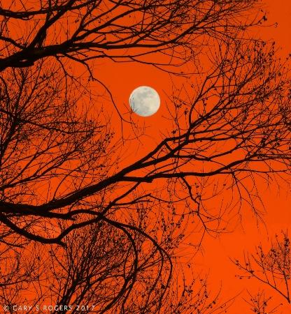 Full Moon through Branches #3