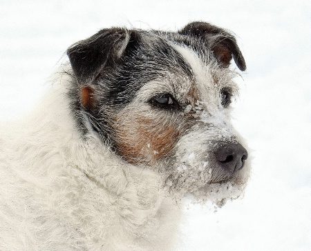 """Tuffy, the Snow Dog"""