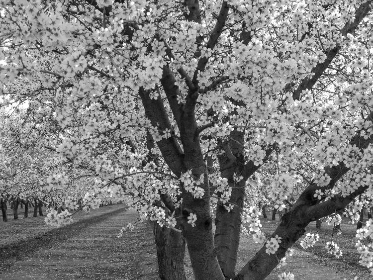 Spring has Sprung - ID: 15333706 © Laura Wald