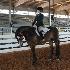 © Tracy Bazemore PhotoID# 15334953: horse e-2959
