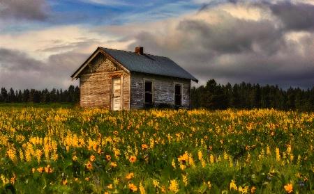 Prairie Spring