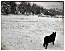 A Gentle Shepherd Watching