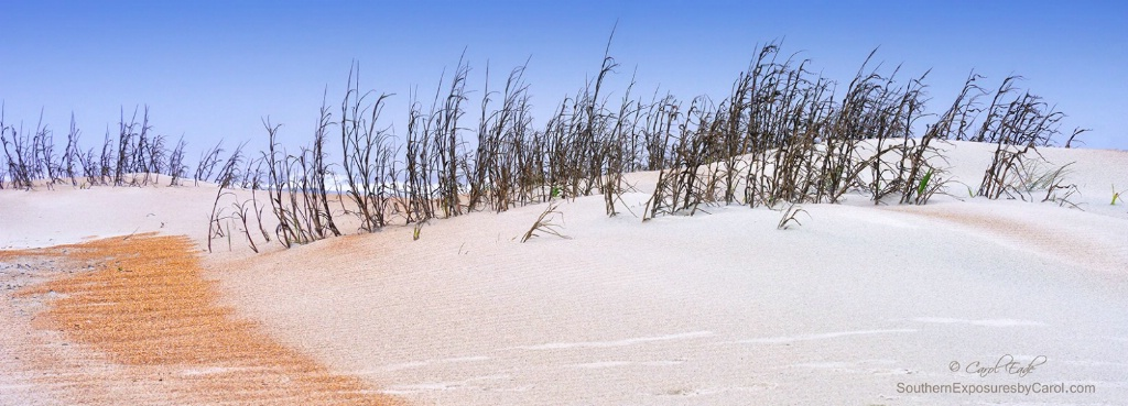 Ancient Dunes - ID: 15335986 © Carol Eade