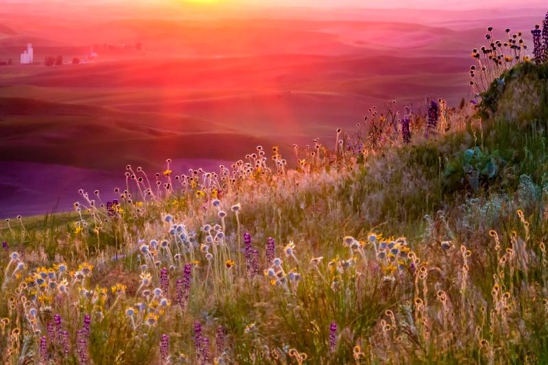 Wild Flowers  4203 - ID: 15337808 © Karen Celella