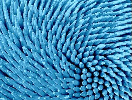 Toothpicks In Blue