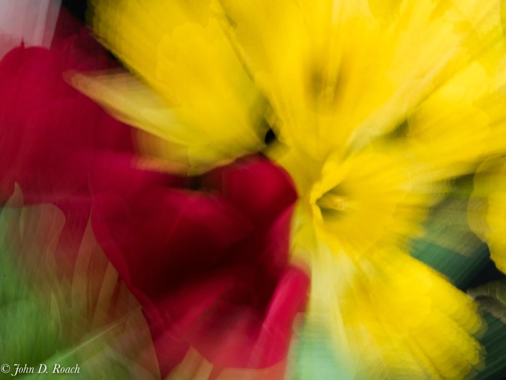 Splash of Color - ID: 15338282 © John D. Roach
