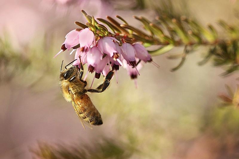 Happy Bee Day, Heather