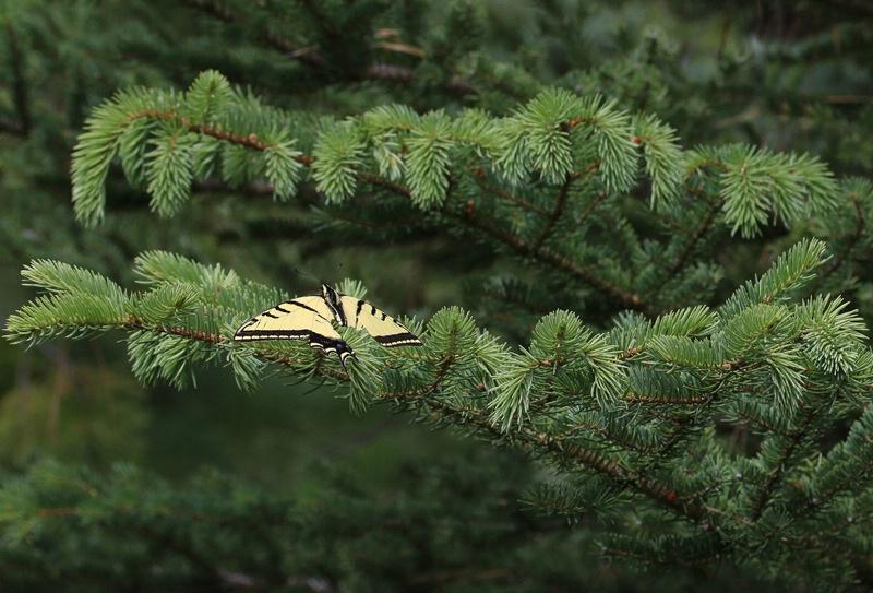 Butterfly - ID: 15340076 © Laura Wald