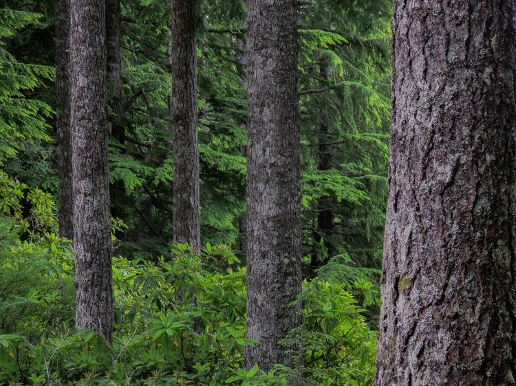 Washington Forrest - ID: 15340079 © Laura Wald