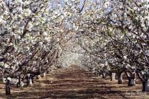 Leona Valley Orchard