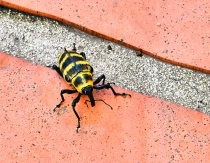 Why Did The Beetle Cross The Road?