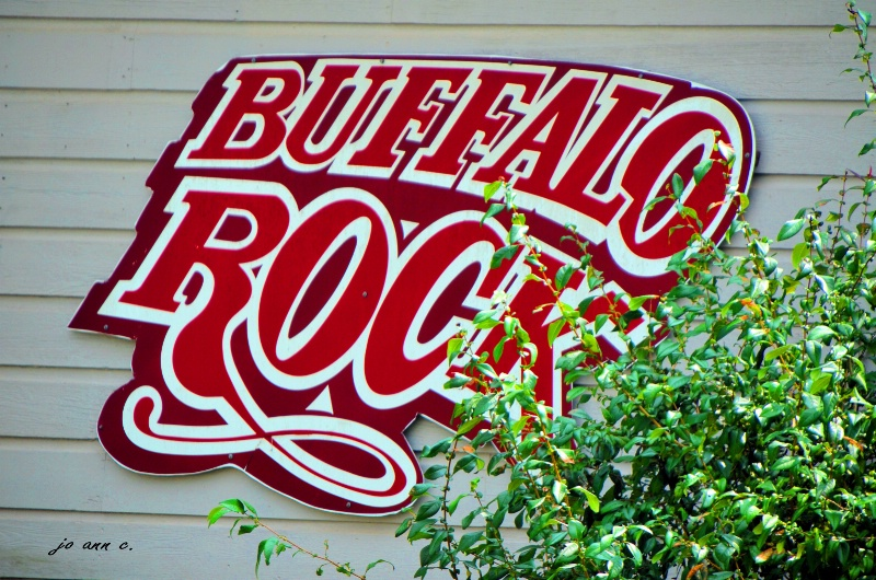 ???Do Buffalo's Really Rock???