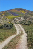 Road to Super Bloom
