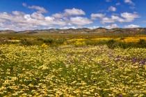 Vast ~ Beautiful ~ California