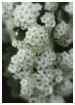 bridal veil spire...