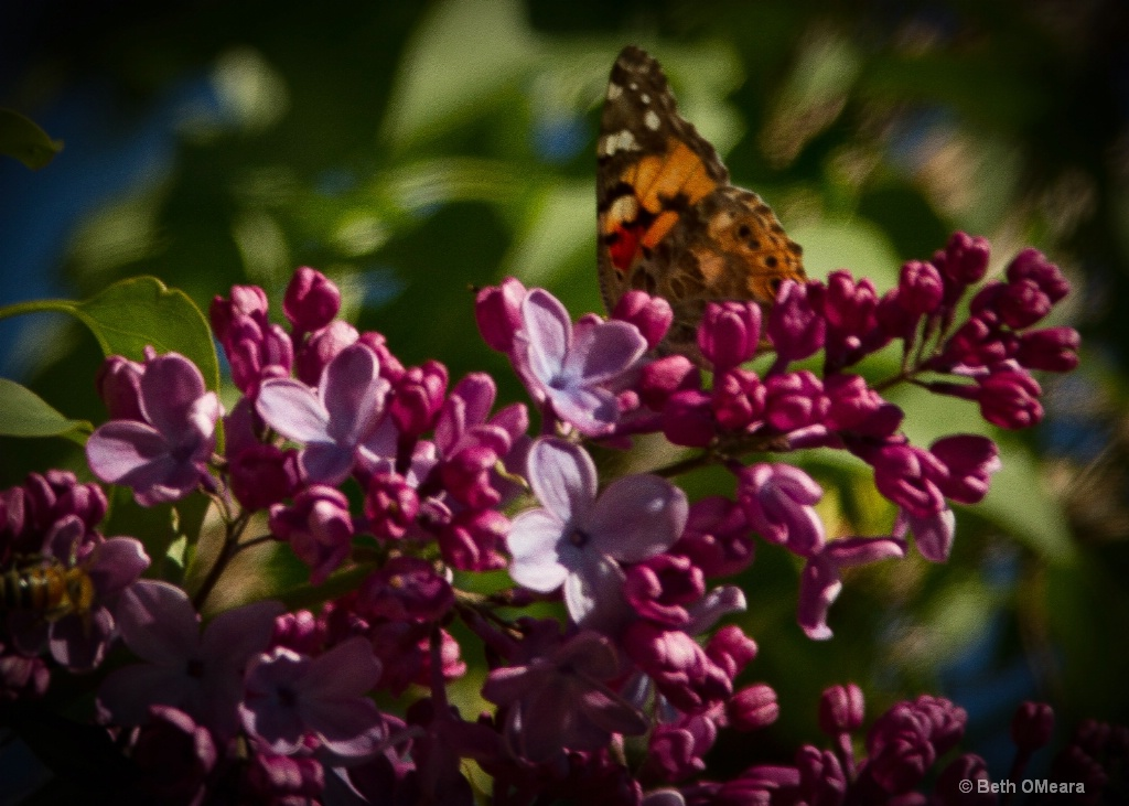 Butterfly and Lilac - Original