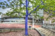Dimopoulos Blue Trees in Denver Colorado