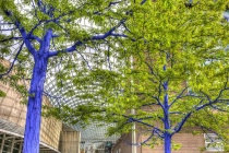 Dimopoulos Blue Trees