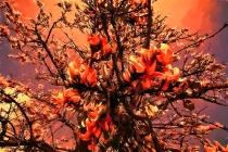 Each flower, a flame