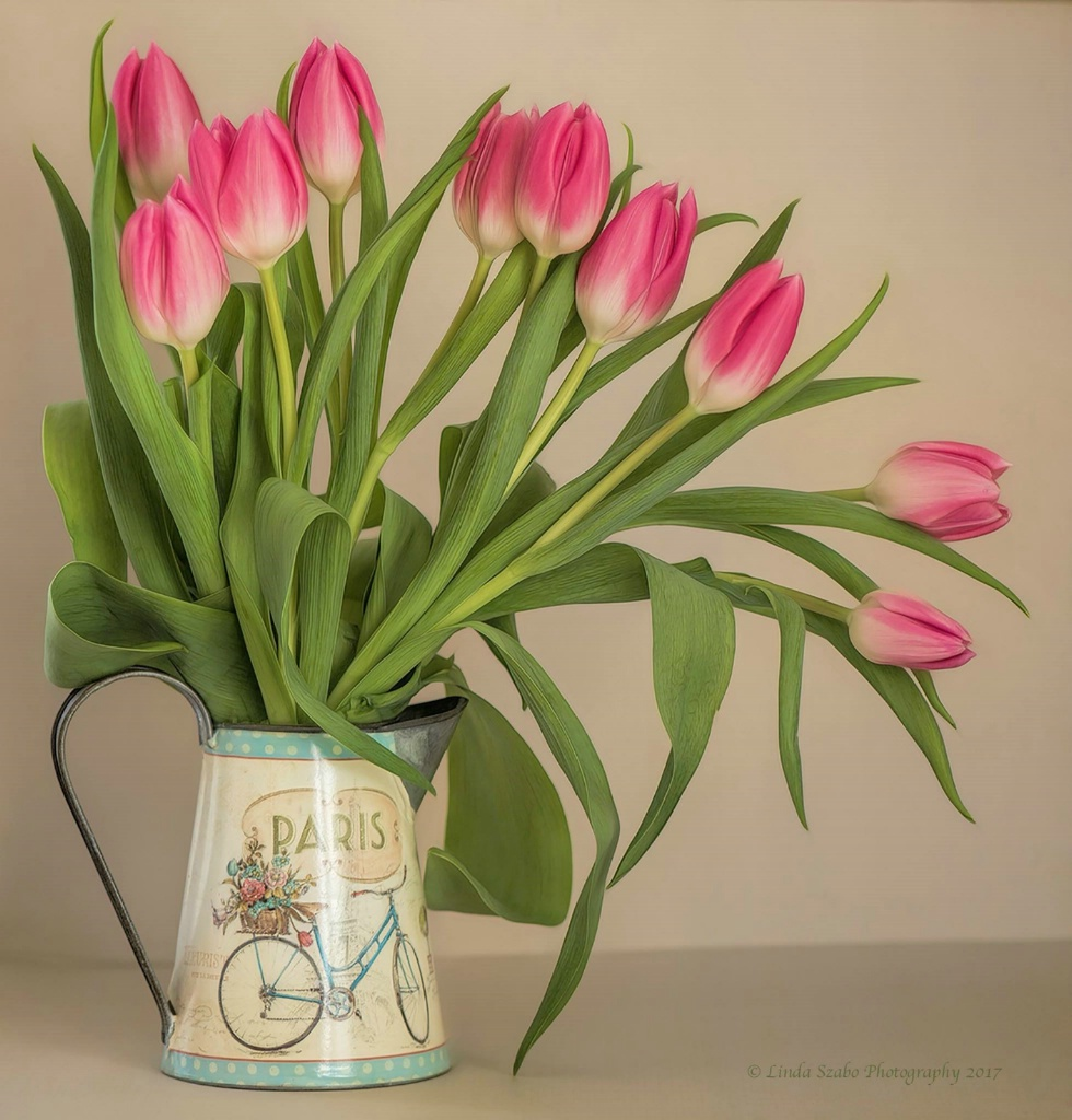 Cascade of Pink Tulips