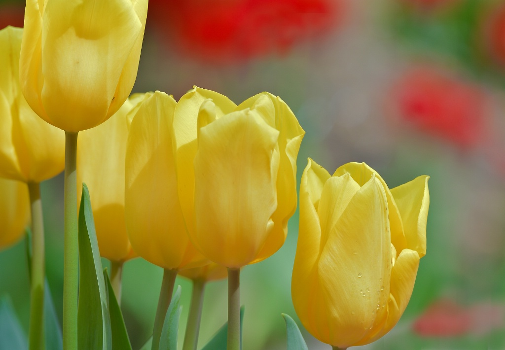 Dancing yellows