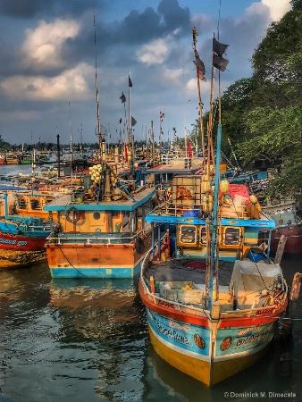 ~~ FISHING BOATS OF NEGOMBO ~ ~