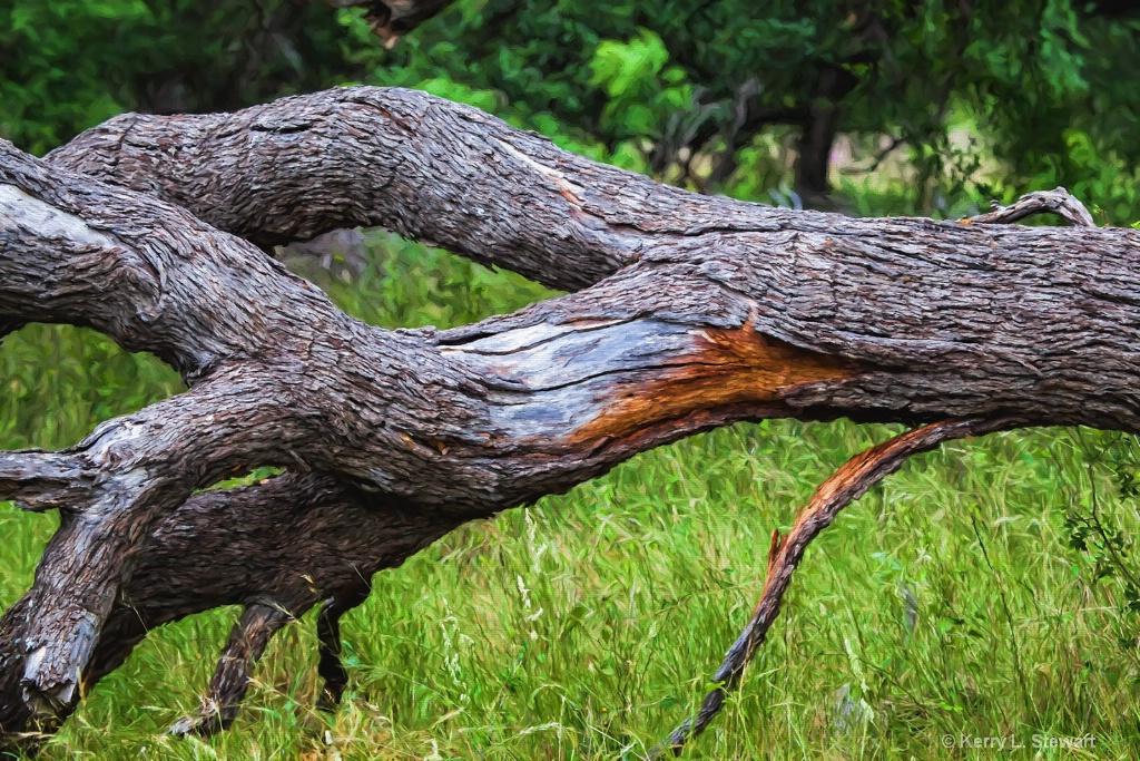 Downed Tree - ID: 15362358 © Kerry L. Stewart
