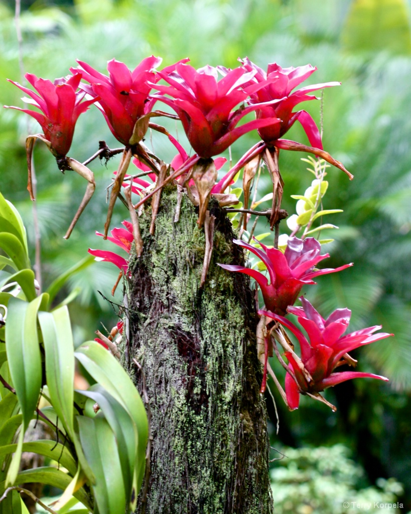 Hilo Botanical Garden - ID: 15362427 © Terry Korpela