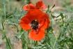 Anemone Wild
