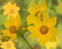 A Generosity of Wildflowers
