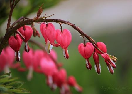Tandem Hearts