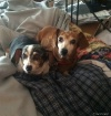 Two dogs that hav...