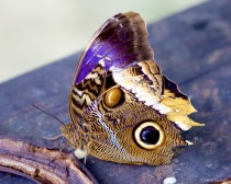 St. Thomas Butterfly Farm
