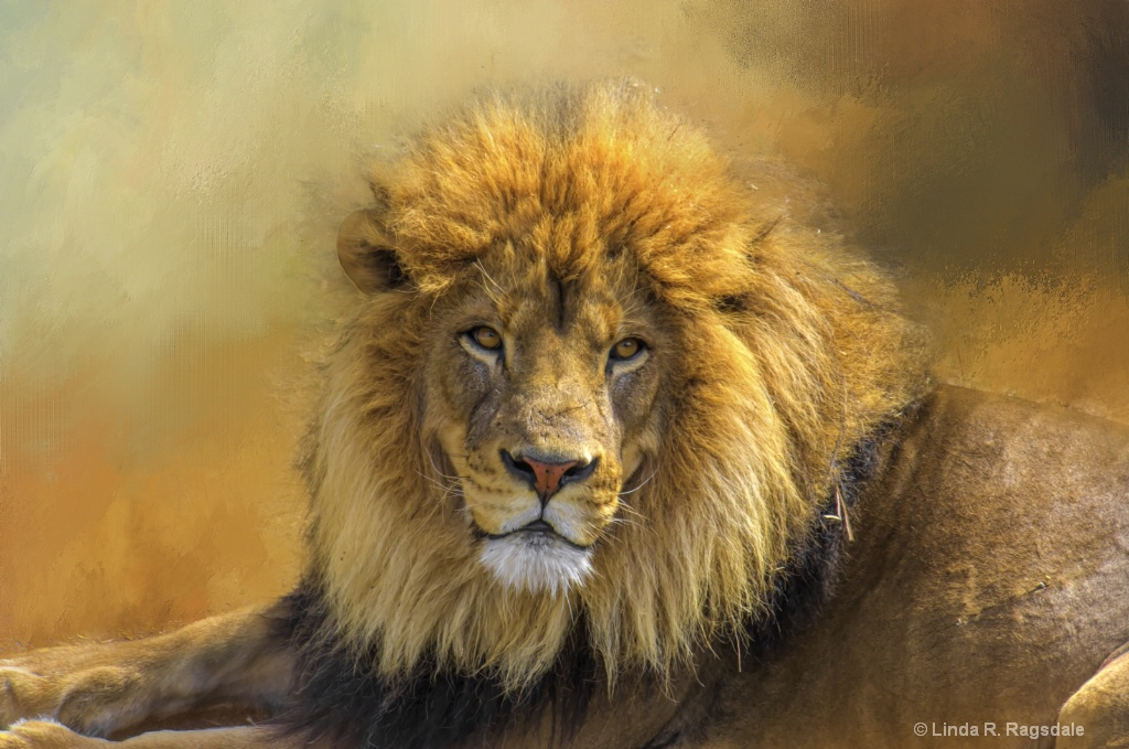 King of the Jungle - ID: 15370435 © Linda R. Ragsdale