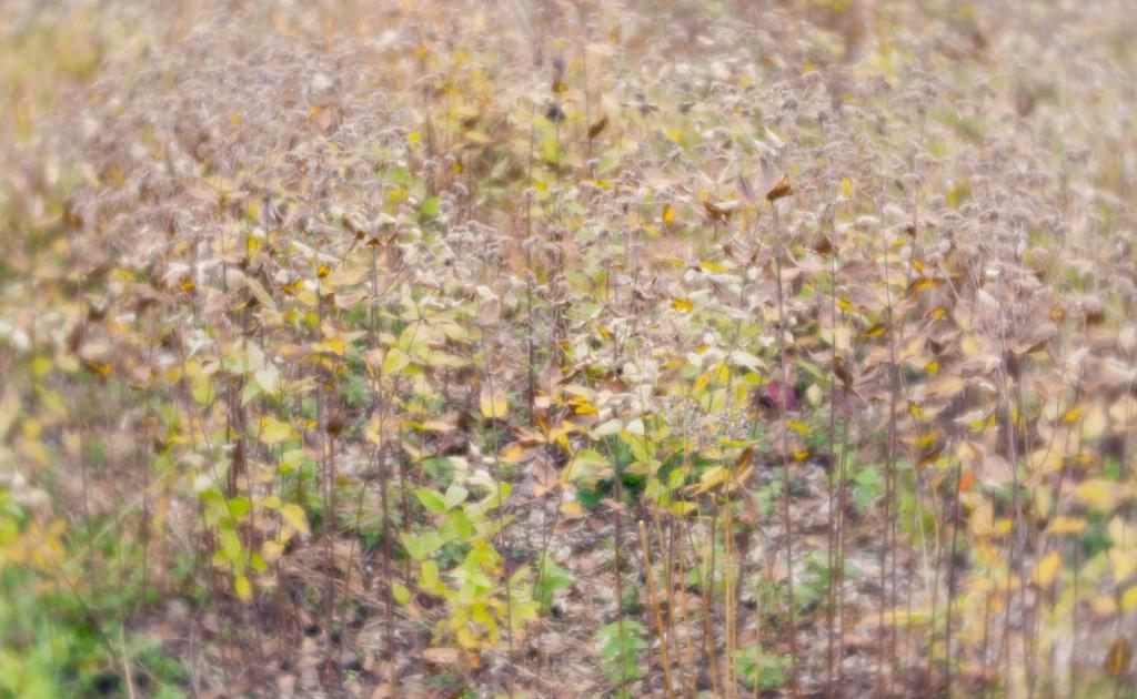 Meadow, Longwood Gardens, PA - ID: 15372480 © Nora Odendahl