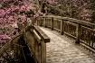 Bridge Blossoms