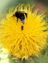 Bee busy....