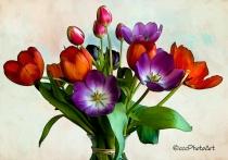 Spring Splash Tulips