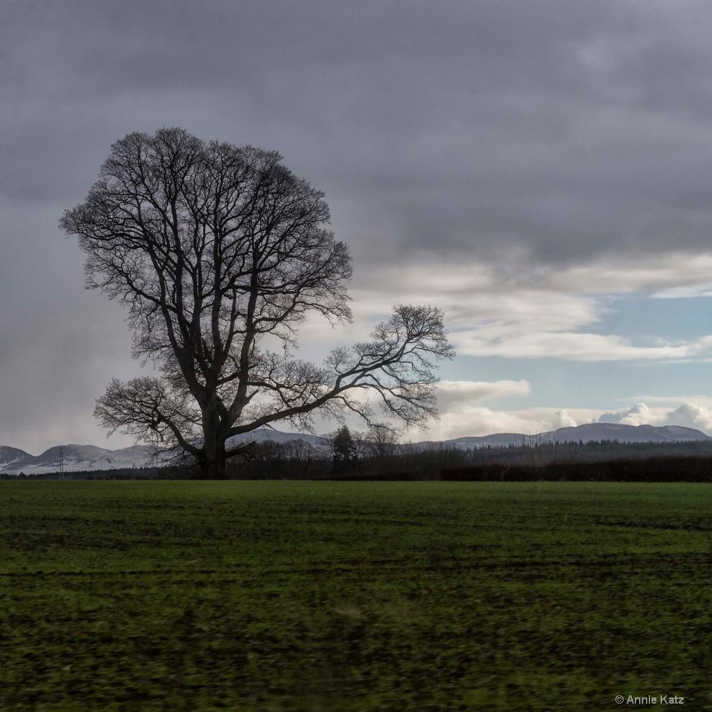 Tree - ID: 15378871 © Annie Katz