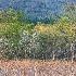 2Cades Cove Landscape II - ID: 15379079 © Fran  Bastress