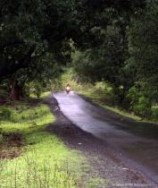 Monsoon Green Western Ghats