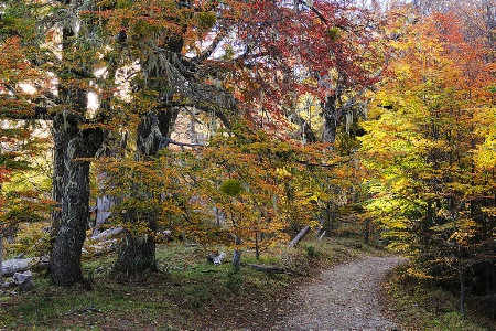 Path in the lenga forest