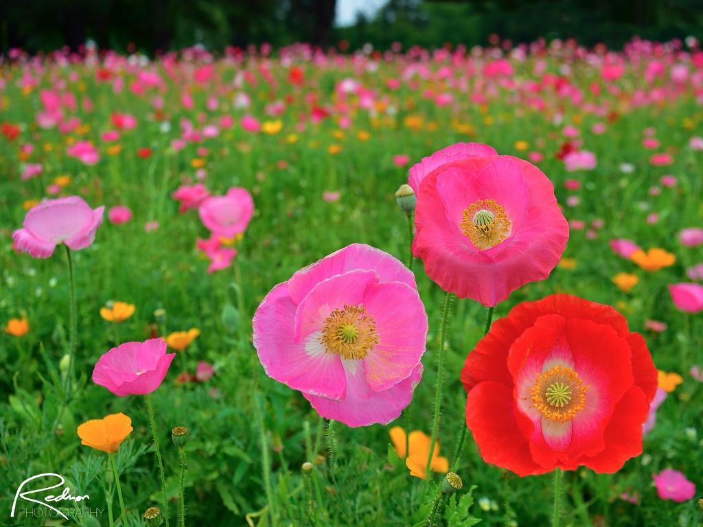 In the Wildflower Fields 2