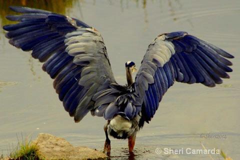 Morning Stretch - ID: 15385746 © Sheri Camarda