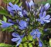 Dusky Blue - Wide...