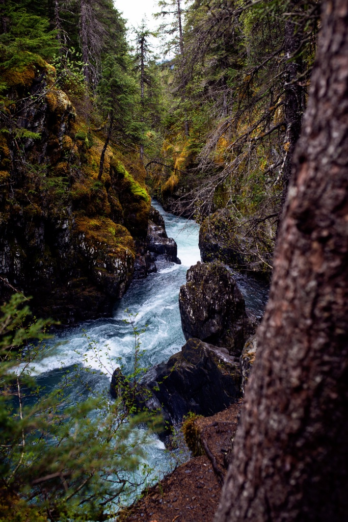 The rushing river along the Iditarod trail
