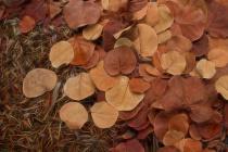 Artfully Scattered Sea Grape Leaves