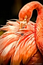 Artistic Cape May Flamingo 6-16-17 481