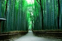 The Green Garden in Kyoto