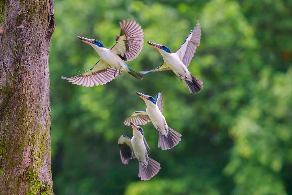 Flight motions
